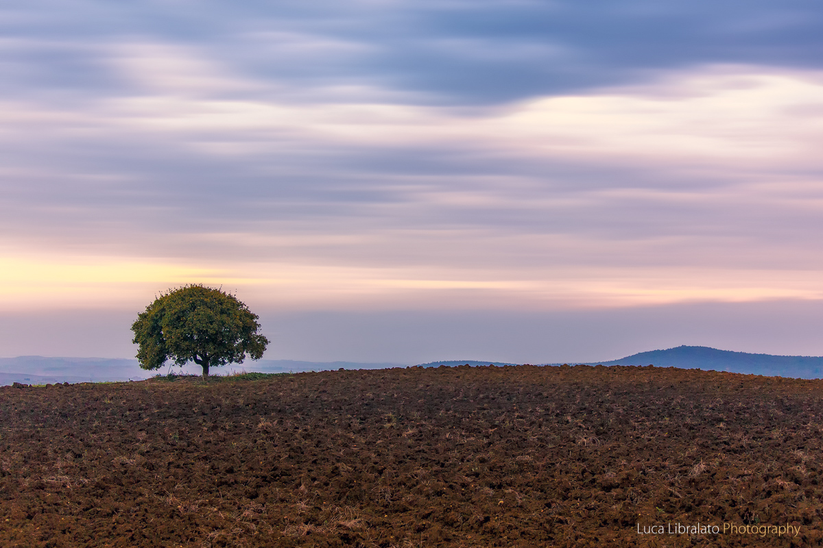 The Solitary Tree